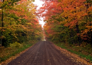 minnesota-fall-color-tours-1.jpg